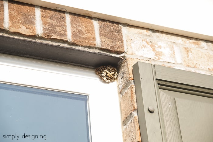 wasp nests in corner of windows - how to kill wasp nest