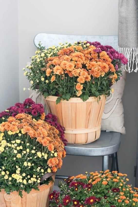 Front Entry Fall Decor