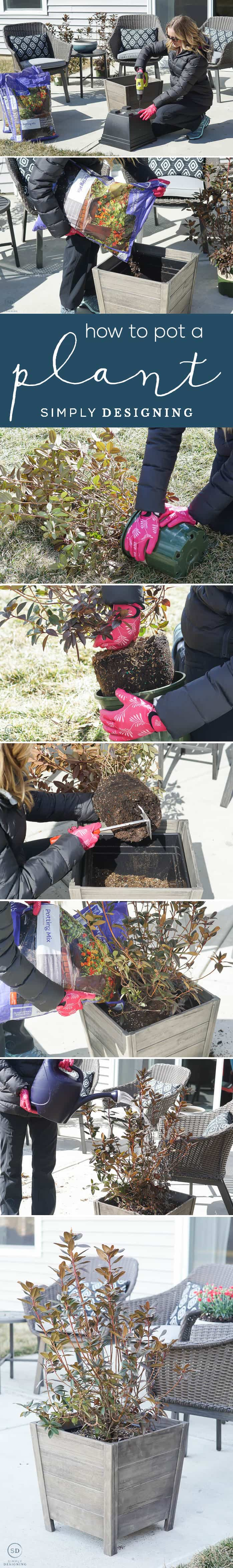 How to Pot a Plant in a large planter