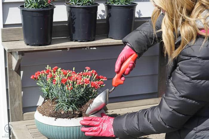 add more soil to pot