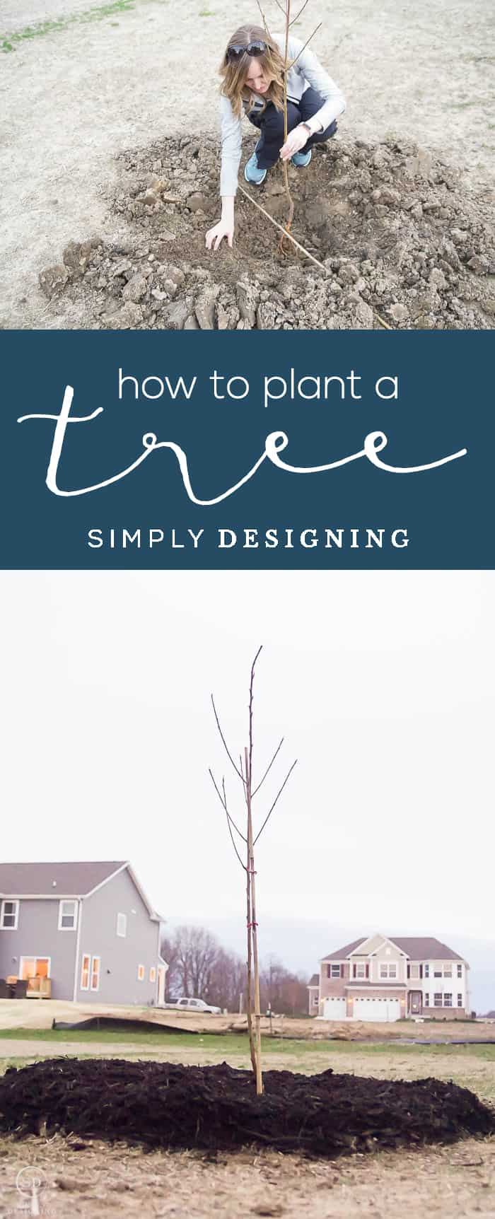 How to Plant a Tree - spring or fall means it is time to get out and do yard work and so I am really excited to share my tips and tricks for How to Plant a Tree