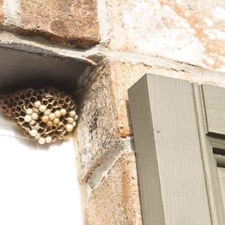 how get rid of wasps nest