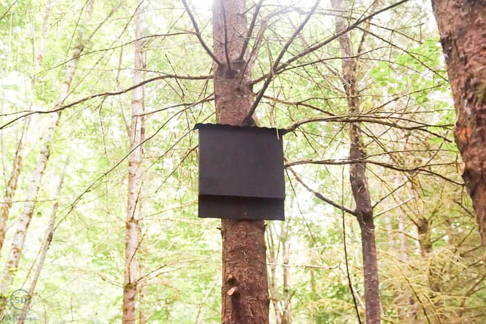 bat house high up in a tree