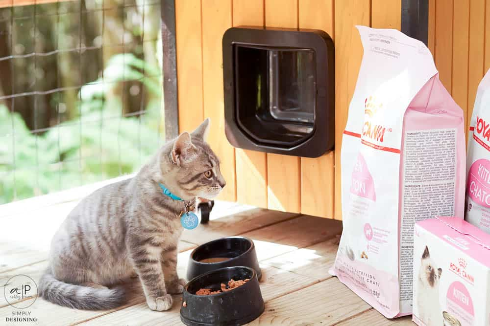 grey kitten looking at cat food in bags with modern cat house in background