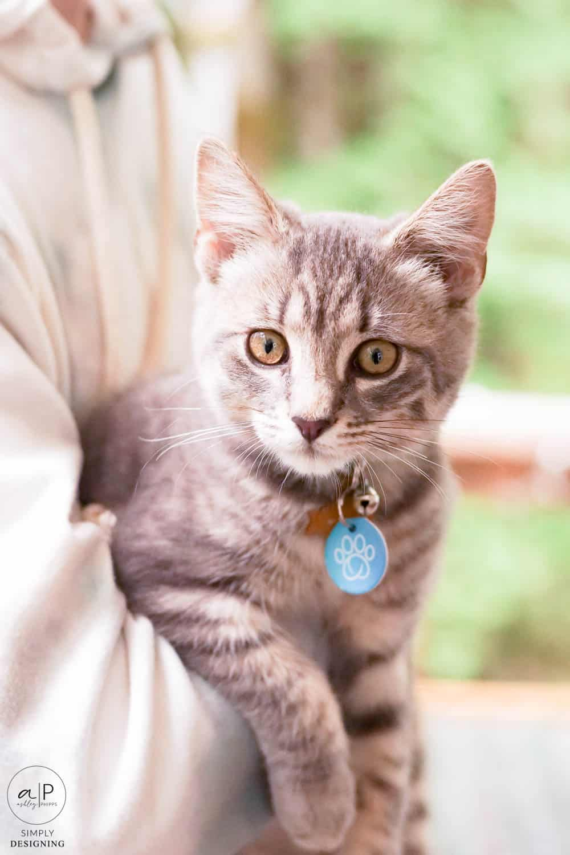 grey kitten up close
