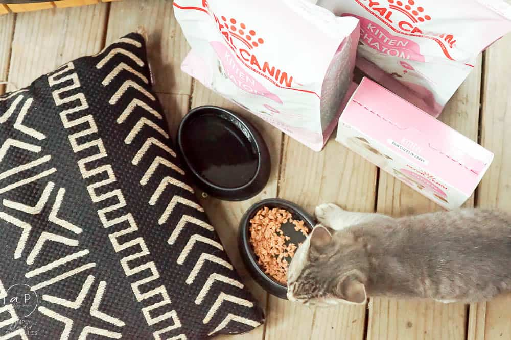 looking down on a kitten, cat food and a black pillow
