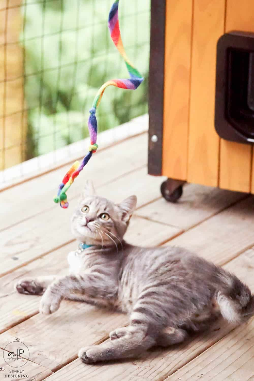 grey cat playing with a ribbon and cat house in the background